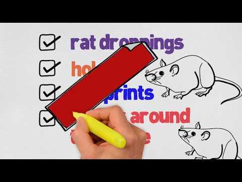 Rat Control in Miami - Toro Pest - Call: 305-594-4767