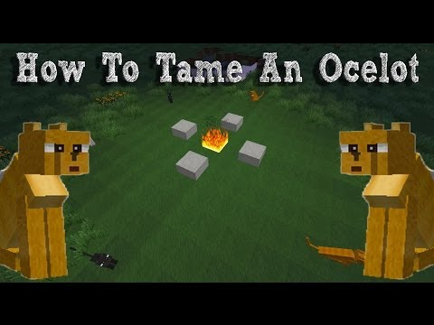 Minecraft Tutorial: How To Tame An Ocelot