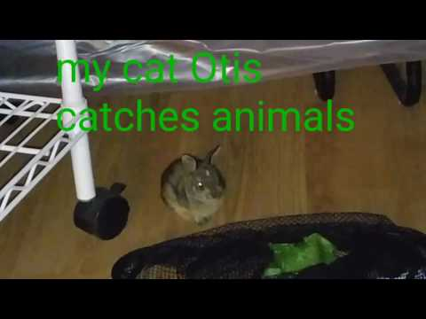 The Lost Rabbit