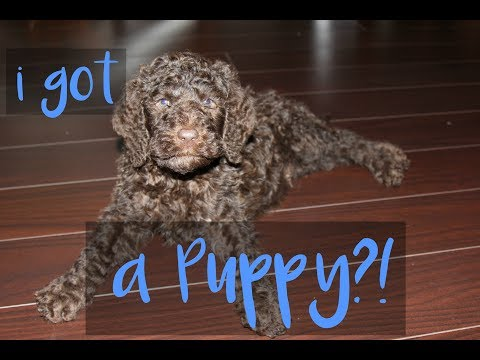 The Story Of Getting My Puppy // January 7th //
