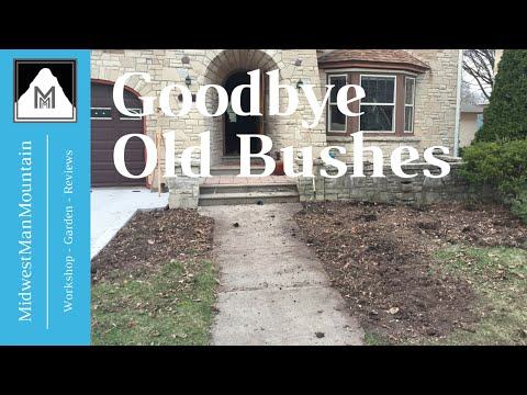 How to Remove Old Overgrown Shrubs & Bushes