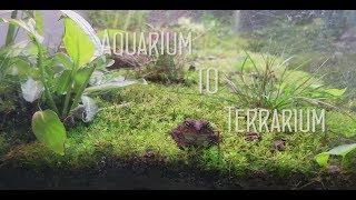Aquarium to Terrarium