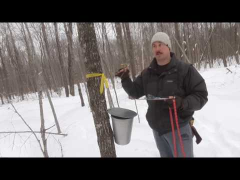 Maple Tree Growth Rate Experiment - Part 1