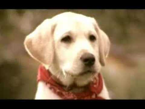 give a puppy a chance to become a guide dog