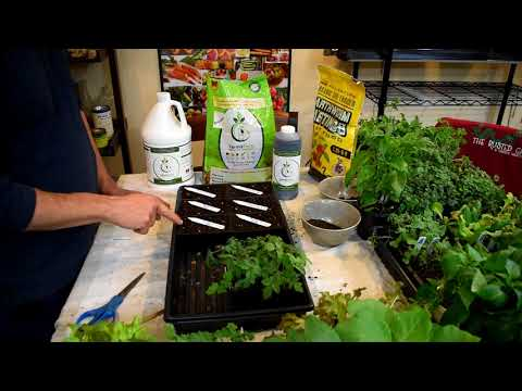 How to Use Worm Castings for Your Tomato & Vegetable Seed Starts: Starting Tomatoes NO Grow-Lights!