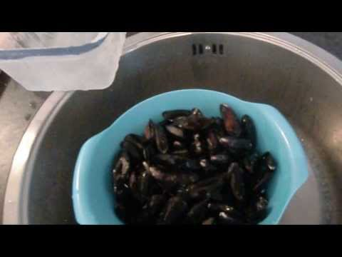 HOW TO COOK : Easy, quick and delicious mussels!
