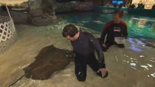 RMR: Rick at Ripley's Aquarium of Canada