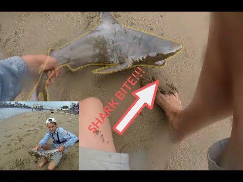 NEAR SHARK BITE while fishing for big BRISBANE RIVER BULL SHARKS!