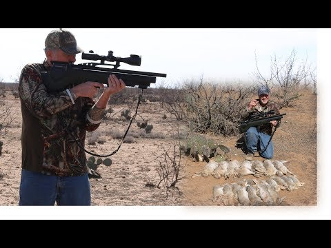 Airgun Hunting: The Daystate Bullpup in Texas!