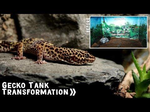 Leopard Gecko Natural Arid Tank Build #2