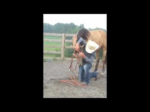Bridling Tip from Working Horse Tack