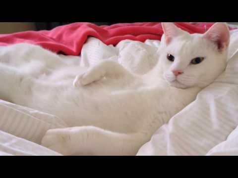 Casper - The White Cat
