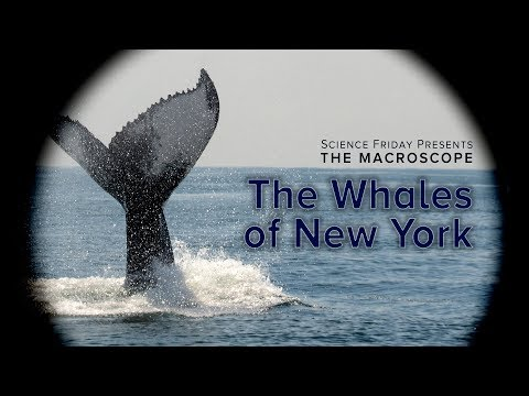 The Whales of New York