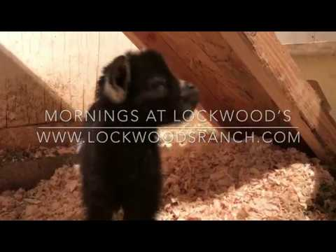 Weekend Farmgirl: Lockwood's Ranch - Welcome Miss Molly