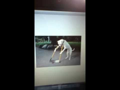 Dog cleaning poop