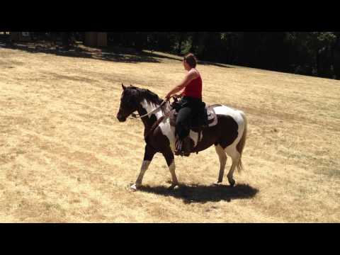 Exposing a Horse to Dragging Scary Objects - Sacking Out - Rick Gore Horsemanship