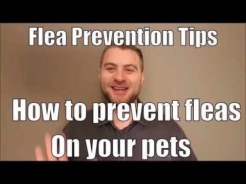 Flea Prevention tips and how to prevent fleas on your pets