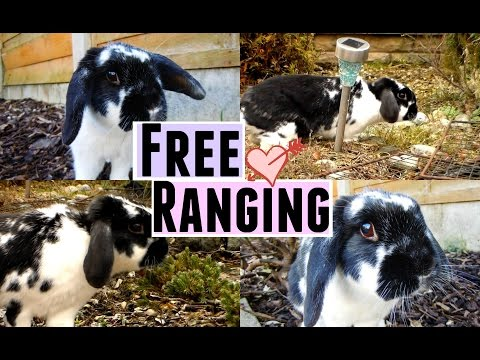 FREE RANGING ♡ | RosieBunneh