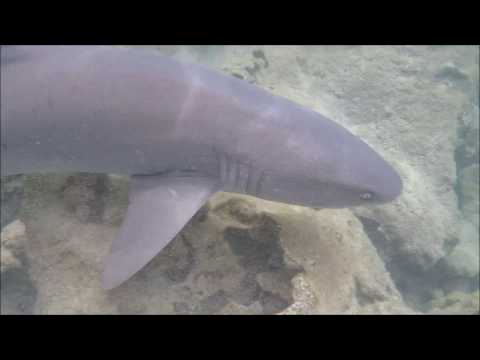 I got a little too close to this 5 foot White Tip Reef Shark