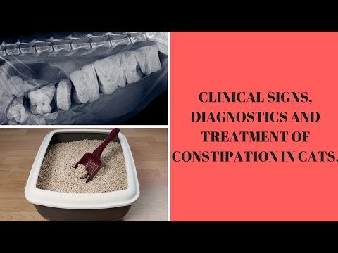 CLINICAL SIGNS, DIAGNOSTICS AND TREATMENT OF CONSTIPATION IN CATS