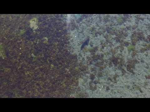 drone sharks