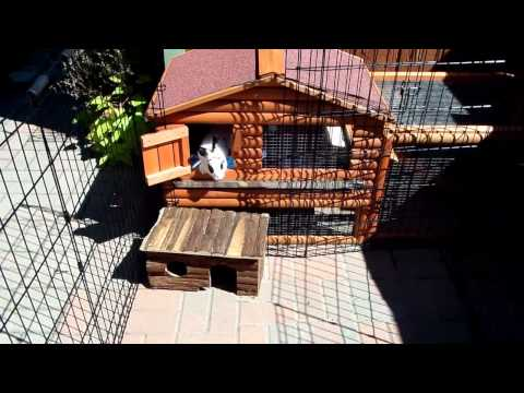 Rabbits Daisy and Lilly Outdoor Set Up
