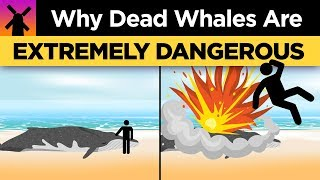Why You Shouldn't Ever Touch a Dead Whale