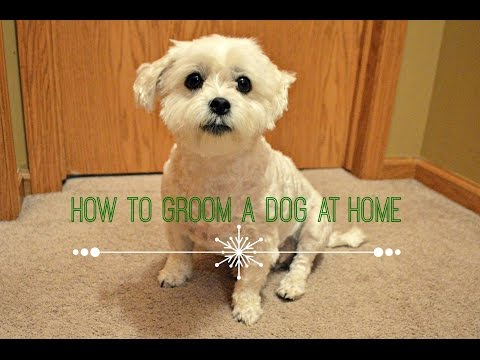 How To Groom A Dog At Home (Basic)