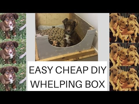 Easy. Cheap. Diy. Whelping box plus PUPPY UPDATE