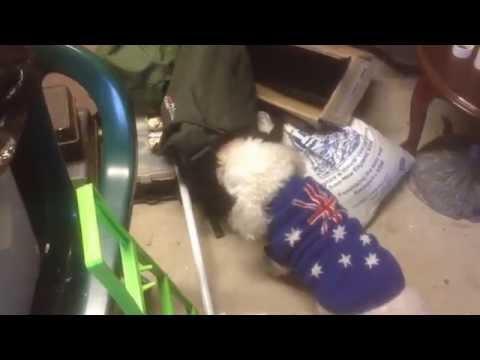 Becky The Dog Raids Her Friend's Treat Bag