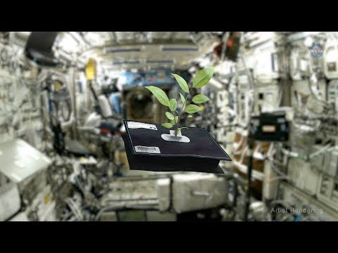 ScienceCasts: Space Gardening