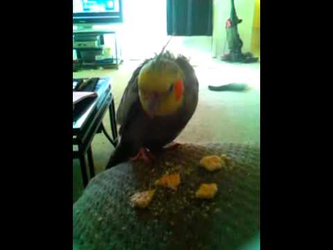 Popye loves club crackers