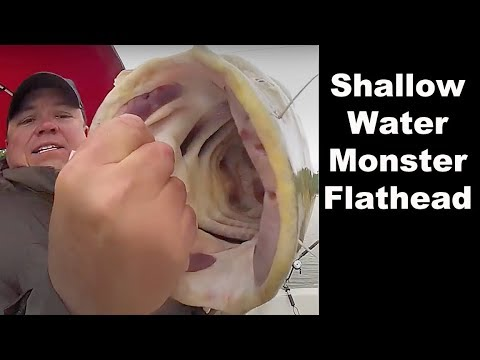 Shallow Water Spring Flatheads - Tips for Catching Flathead and Blue Catfish in Shallow Water