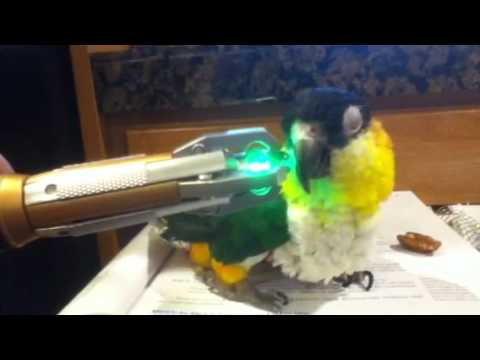 Onyx the Caique Speaks Sonic!