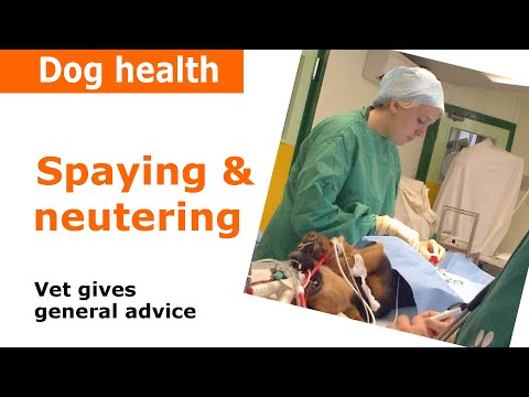 Spaying a dog | Dog castration - Vet Advice