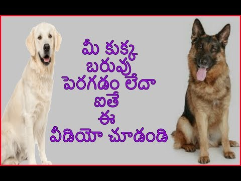 Why Your Dog is not gaining weight | How to GAIN weight in Telugu | Taju logics