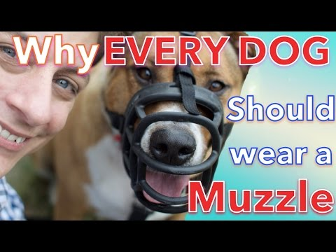 How & Why EVERY DOG Should LOVE Wearing a MUZZLE