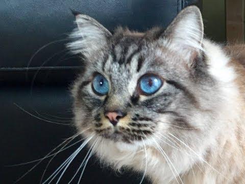 Toilet Train Your Cat in 60 Seconds