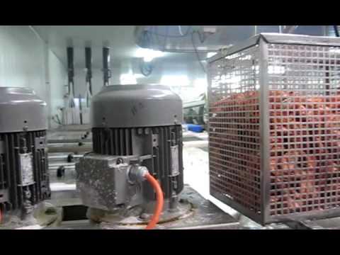 Frozen cooked shrimp