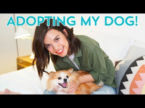 How I Adopted a Dog (Tayto's Rescue Story)! Ingrid Nilsen