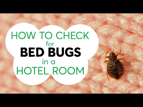 How to Check for Bed Bugs in a Hotel Room | Consumer Reports