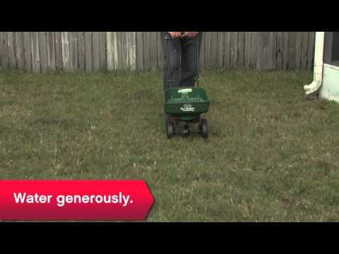 How To Improve Your Lawn - Ace Hardware