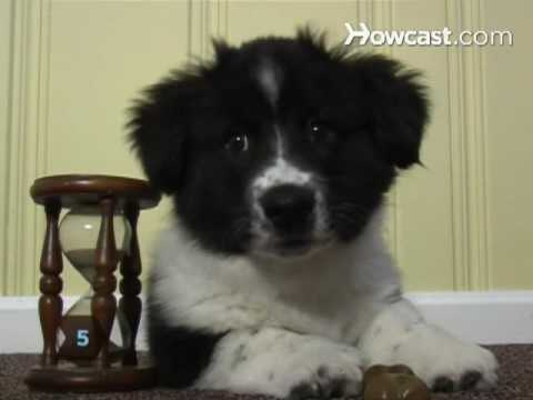 How to Register a Dog with the AKC