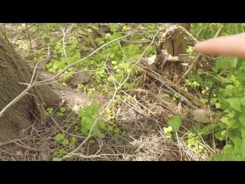 How to build ground blind