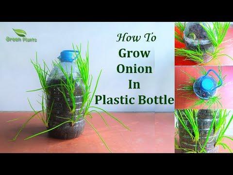 How to Grow Small Onion In Plastic Bottle   Garden Ideas // GREEN PLANTS