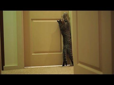 Oskar the Blind Cat - No obstacle stands in his way!