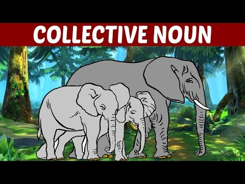 What is COLLECTIVE NOUN - Learn English Grammar | Fun Kids Learning Video