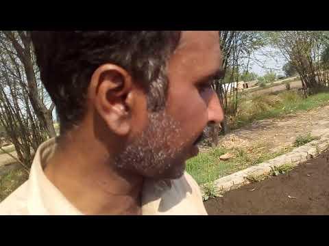 Benefits of fermentation in Urdu/ Hindi / Gobar ka pani khet ko zarkhez kesay banata hay / Fermental