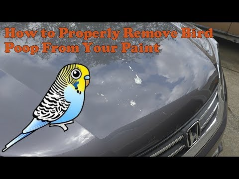 How to properly remove bird poop from paint