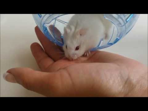 HAMSTER BITE - OUCH!!!!!!!!!!!!!!!!!!!!!!!!!!!!!!!!!!!!!!!!!!!